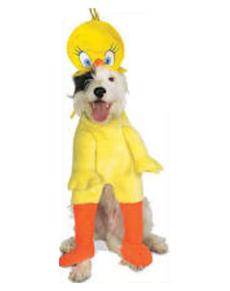 Disfraz de Piolín para perro
